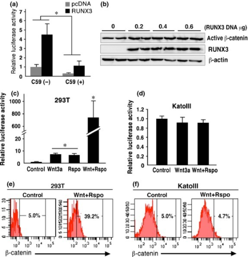 Saturation of ligand-induced β-catenin stabilization in KatoIII cells. (a) Luciferase activity of TOPflash/FOPflash in KatoIII cells transfected with RUNX3 or control vector in the absence or presence of the C59 relative to the control cell level (mean ± SD). *P < 0.05. (b) Western blotting for active β-catenin and RUNX3 in KatoIII cells transfected with RUNX3 vector. (c,d) Relative luciferase activity of TOPflash/FOPflash in the 293T cells (c) and KatoIII cells (d) treated with Wnt3a and/or Rspondin. (mean ± SD). *P < <0.05 versus control level. (e,f) Flow cytometry analyses of β-catenin in the control cells (left) and cells treated with Wnt3a/Rspondin (right) in 293T (e) and KatoIII cells (f). The proportion (%) of the β-cateninHi population (top 5% level of the control) is indicated.