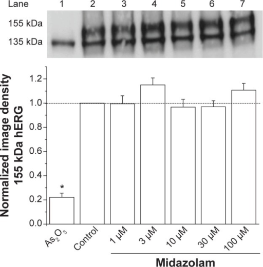 Midazolam does not attenuate hERG channel surface expression. Effects of midazolam on channel surface expression analyzed by the Western blot technique (upper panel). Image density of the 155 kDa hERG form divided by the 135 kDa hERG form was determined to quantify channel surface expression (lower panel). Incubation with 100 μM As2O3 served as a positive control. Compared with control conditions (lane 2), increasing midazolam concentrations (lanes 3–7) did not result in a significant change of channel surface expression.Abbreviation: hERG, human ether-à-go-go-related gene.