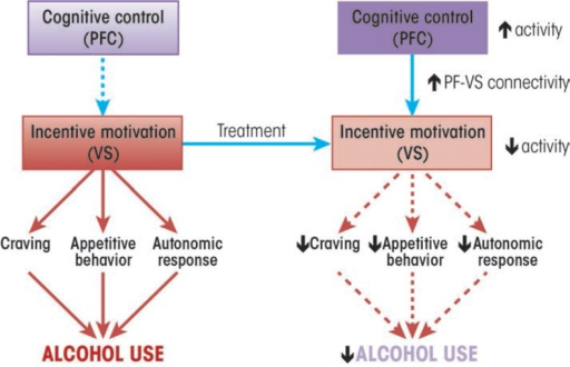 A potential common mechanism for alcohol use disorder (AUD) treatments. A number of studies suggest that AUD treatments elicit behavior change by increasing the regulation of brain regions that mediate incentive motivation, such as the ventral striatum, by prefrontal cortical regions that mediate cognitive control. Arrows denote expected changes in specific neural, behavioral, psychophysiological and clinical outcome measures, given this hypothesized treatment mechanism. PFC = prefrontal cortex. VS = ventral striatum.