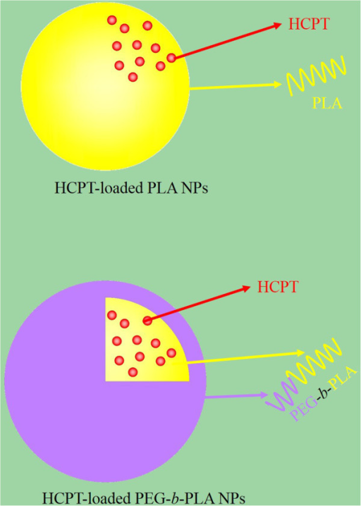 Schematic representations of HCPT-loaded PLA NPs and HCPT-loaded PEG-b-PLA NPs.