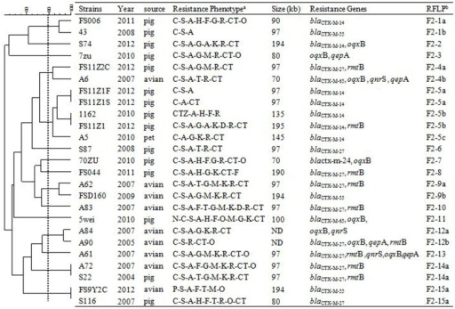 RFLP patterns and characterization of multi-resistance 25 F2: A-: B- plasmids.
