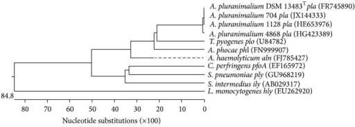 Dendrogram of sequences of gene pla of A. pluranimalium 4868 of the present study, three additional A. pluranimalium, and various other cytolytic toxin encoding genes obtained from GenBank.