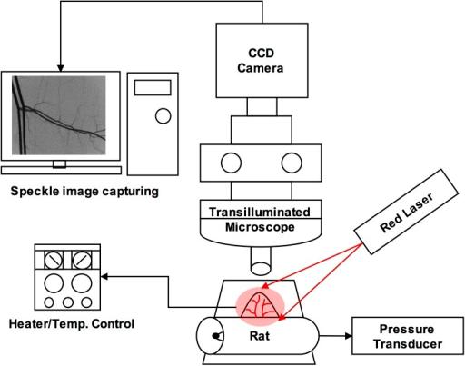 Schematic diagram of intravital microscopic laser speck open i schematic diagram of intravital microscopic laser speckle contrast imaging system lsci ccuart Gallery