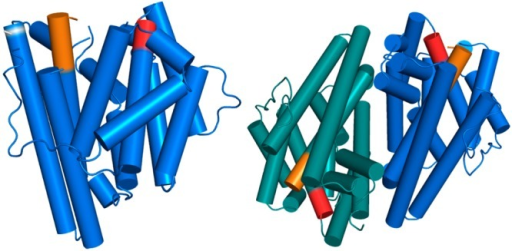 Structure of the GdolS-E248A monomer (left) and dimer(right).The aspartate-rich and NSE metal binding segments are colored redand orange, respectively. The position of the E248A substitution thatpermitted crystallization is indicated as a white band.
