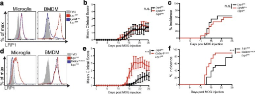 Deletion of LRP1 from microglia, but not from peripheral myeloid cells, exacerbates EAE progression. a LRP1 expression was determined by flow cytometry on microglia and BMDM isolated from LysMcre-Lrp1fl/fl and Lrp1fl/fl mice. b Clinical scores and c incidence of LysMcre-Lrp1fl/fl and Lrp1fl/fl mice (n = 7–9 for each group, representative of 3 independent experiments). d LRP1 expression was determined by flow cytometry on microglia and BMDM isolated from Cx3cr1creER-Lrp1fl/fl and Lrp1fl/fl mice. e Clinical scores and f incidence of Cx3cr1creER-Lrp1fl/fl and Lrp1fl/fl mice (n = 6–10 for each group, representative of 3 independent experiments.). 2-way ANOVA was used for the mean clinical score and the log-rank (Mantle-Cox) test was used for incidence. ***p < 0.001, mean ± s.e.m