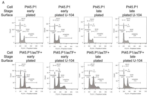 Decreased cell cycle progression under CAIX inhibitionThe effect of 75 μM U-104 on cell cycle progression was assessed by flow cytometry after propidium iodide staining. A) Flow cytometry profiles of PT45.P1 cells transfected with asTF or vector after staining with propidium iodide to analyze the phases of the cell cycle. The plating conditions are indicated above each graph. B,D) Percentage of cells in the G0/G1 phase of the cell cycle for Pt45.P1/asTF+ cells (B) and Pt45.P1 cells (D). C,E) Percentage of cells in the G2/M phase of the cell cycle for Pt45.P1/asTF+ cells (C) and Pt45.P1 cells (E). The error bars are SEM. * indicates significance at p < 0.05.