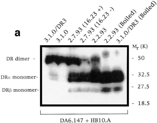 mAb 16.23 and  mAb 16.23low sorted subpopulations of 2.7.93-type mutants express differential levels of stable  HLA-DR dimers. (a) SDS stability of HLA-DR molecules from  cell-sorted mAb16.23 and  mAb 16.23low subpopulations of  mutant 2.7.93. Western blots  were stained with a combination of mAbs DA6.147 and  HB10.A. (b) Bimodal reexpression of the mAb 16.23 epitope in  subclones of the 2.7.93 mAb  16.23 sorted subpopulations.  2.7.93 cells were stained in indirect immunofluorescence with  mAb 16.23. Each panel represents mAb 16.23 staining of an individual subclone of 2.7.93 (mAb 16.23); subclones of the mAb 16.23low subpopulation show similar bimodal reexpression of the mAb 16.23 epitope (data not shown).
