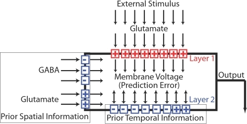 "Schematic illustration of a model neuron.Arrows indicate the direction of information flow. A typical neuron receives inputs from the sensory periphery via glutamate, which depolarizes the membrane potential (""+""). The glutamate-gated ion channels and synapses that mediate this response are referred to as layer 1. They define the neuron's stimulus (the ""excitatory center"" of its receptive field). The function of layer 1 is to provide current information about the external world. Those individual inputs that are most successful in depolarizing the neuron, and which are most closely correlated with reward, are selected according to a Hebbian or error-maximizing rule (equation 4). The neuron's other ion channels constitute layer 2. The function of layer 2 is to use prior information to predict membrane voltage, and thereby predict the conductance of layer 1 and glutamate concentration as well. The membrane voltage is determined by the difference between the output of layer 1 and its expected output as determined by layer 2 (equation 1), and it therefore functions as a prediction error. In predicting voltage, layer 2 acts to drive voltage towards a point near the middle of its range where the error is zero. The ion channels of layer 2 are selected to perform this function by an anti-Hebbian or error-minimizing rule (equation 3). Many of these ion channels are inhibitory (""−"") and tend to open when the neuron is depolarized, whereas others are excitatory (""+"") and tend to open when the neuron is hyperpolarized. Some are gated by membrane voltage and provide prior temporal information, whereas others are gated by neurotransmitters and contribute prior spatial information."