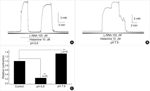 Effects of alteration of pHo on the histamine-induced contraction in basilar arteries of rabbits. 10 µM of histamine produced tonic contractions in rabbit basilar artery. (A, B) Histamine-induced contraction was decreased or increased by pHo 6.8 or pHo 7.9 in a reversible manner. (C) Bar graphs show mean relative histamine-induced contraction by alteration of pHo. Asterisks indicate the data which were considered to be significantly different from control data (**p<0.01).