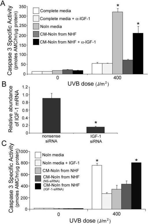 IGF-1 secreted by normal human fibroblasts can protect keratinocytes from UVB-induced apoptosis(A) To determine if normal human fibroblasts can produce a protective factor which can activate the IGF-1R and restore the normal UVB response of keratinocytes, normal human fibroblasts were grown in the EpiLife NoIn media for 48 h (referred to as Conditioned Media, CM). Keratinocytes were grown in EpiLife NoIn media for 48 h and subsequently the media was replaced with EpiLife Complete media, EpiLife NoIn media, or EpiLife NoIn-CM derived from fibroblasts. Aliquots of EpiLife Complete media and CM-NoIn were treated with a neutralizing antibody to IGF-1 (Calbiochem, α-IGF-1, Ab2; inhibits 50% at suggested concentration) 15 min prior to adding it to the keratinocytes. One hour following media exchange, the keratinocytes were irradiated with 0 or 400 J/m2 of UVB. Six hours post-irradiation, the keratinocytes were harvested and assayed for the induction of apoptosis. Error bars indicate the standard error of the mean; the asterisk indicates significant difference between caspase 3 specific activities derived from keratinocytes grown in Complete media versus NoIn media (p<0.01, t-test). The data presented represent three independent assays. (B and C) Fibroblasts were treated with IGF-1-specific siRNA or non-specific siRNA for 24 h. NoIn media was then added to the fibroblasts for 48 h. At that time, the media was removed, filter-sterilized, and added to keratinocyte cultures. (B) qRT-PCR analysis of IGF-1 expression in fibroblasts following the indicated siRNA treatment. Error bars indicate the standard error of the mean; asterisk indicates significant (p<0.02, t-test) difference from nonsense siRNA-treated keratinocytes. (C) Keratinocytes were grown in NoIn media for 48 h, then the indicated media was added for 1 h. At that time, the keratinocytes were irradiated with the indicated dose of UVB and harvested six hours post-irradiation for caspase 3 analysis. Error bars indicate the standard error of the mean; the asterisks indicate significant difference between caspase 3 specific activities derived from keratinocytes grown in NoIn media + !GF-1 (p<0.03, t-test). The data presented represent three independent assays.