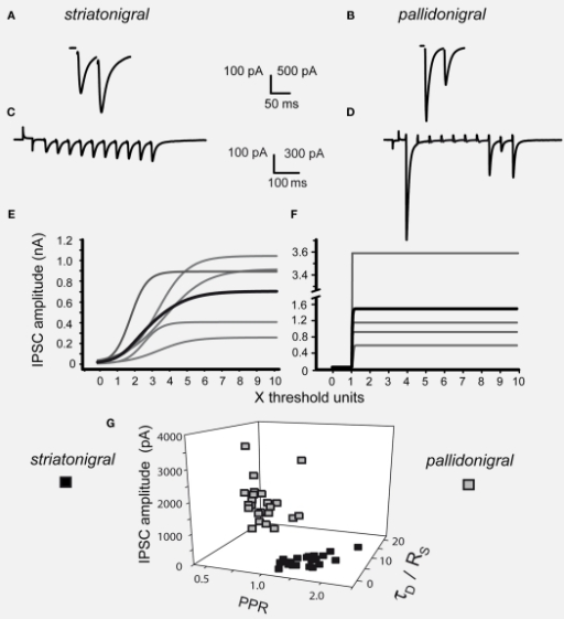Differences between striatonigral and pallidonigral inhibitory postsynaptic currents. (A) Striatonigral inhibitory postsynaptic currents (IPSCs) exhibited paired-pulse facilitation. (B) Pallidonigral IPSCs exhibit paired-pulse depression. (C) Short-term synaptic plasticity (STP) from striatonigral afferents is facilitation. (D) STP from pallidonigral afferents is depression with numerous failures. (E) Intensity–amplitude plots (I–A plots) from striatonigral IPSCs exhibit a sigmoidal shape. (F) I–A plots from pallidonigral IPSCs exhibit a jump to maximal amplitude after reaching threshold. I–A plots were fitted to: A(I) = Amax/(1 + e−k(I−Ih)) where A(I) = IPSC amplitude as a function of stimulus intensity, Amax = maximal amplitude reached, k = slope factor, and Ih = stimulus intensity necessary to reach IPSC amplitude equal to half maximal amplitude. All parameters were significantly different. (G) Cluster plot showing that IPSCs from these sources can be separated. PPR = paired-pulse ratio. τD = decay time constant of IPSCs. RS = rise time of IPSCs.