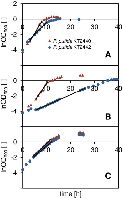 Growth of P. putida KT2440 and KT2442 on citrate, gluconate, and octanoate. Example of the growth curves obtained in shake flasks for P. putida KT2440 and KT2442 cultivated at 30°C in mineral medium supplemented with (A) trisodium citrate dihydrate, (B) sodium gluconate, and (C) sodium octanoate. The straight lines indicate the regimes of exponential growth that were considered for calculation of the maximum specific growth rate.