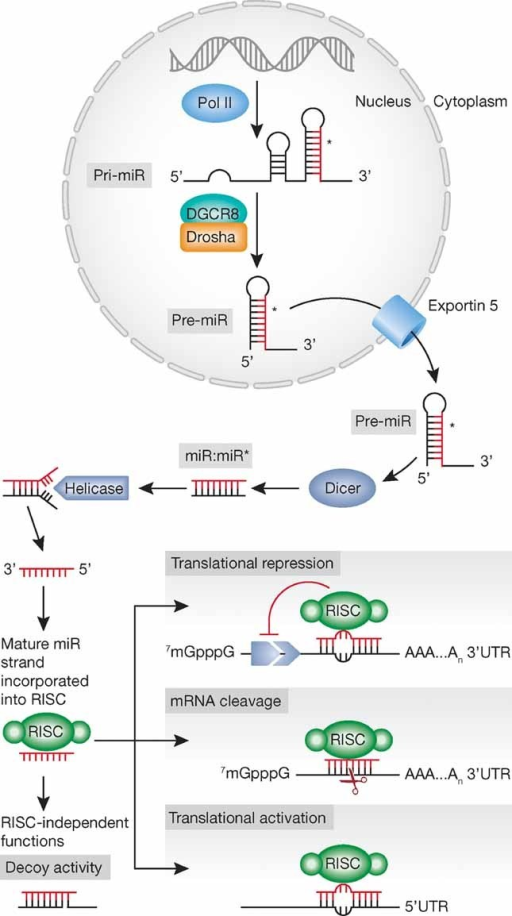 Biogenesis and mechanisms of action: an overview.