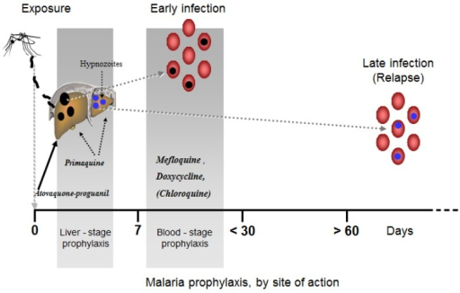 profylaxis of malaria Answer 1 of 13: will be visiting south africa in feb and march 2015 ( kruger, capetown, tembe) is it still possible to buy malaria prophylaxis at pharmacies in south africa without a perscription.