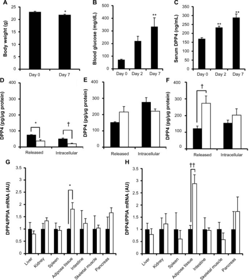 Increased release of DPP4 in streptozotocin-induced diabetic mice.Notes: C57BL/6 mice were injected with streptozotocin to induce type 1 diabetes. (A) Body weights were measured on Day 0 and 7 days after the administration of streptozotocin. *P<0.05 versus (vs) Day 0. n=6. (B) Fasting blood glucose levels and (C) serum DPP4 levels were determined 2 and 7 days after the streptozotocin injection. **P<0.01 vs Day 0. n=6. Adipocytes prepared from (D) control and (E) type 1 diabetic mice were incubated for 24 hours in serum-free DMEM containing 5.5 (closed columns) or 25 mM glucose (open columns). Intracellular and released DPP4 was determined by enzyme-linked immunosorbent assay. n=3. *P<0.05 and †P<0.05 vs release and intracellular groups. (F) Adipocytes obtained from high-fat diet-fed mice fed for 4 weeks were incubated in 5.5 (closed columns) or 25 mM glucose (open columns), and intracellular and released DPP4 levels were determined, as described above. †P<0.05 vs between 5.5 and 25 mM glucose. n=3. DPP4 mRNA levels in different tissues obtained normal mice (closed columns) and diabetic mice (open columns) (G) 48 hours and (H) 4 weeks after the administration of STZ. *P<0.05 and ††P<0.01 vs control tissues. n=4. Housekeeping gene; PPIA. The control values were set to 1.0.Abbreviations: AU, arbitrary units; DPP4, dipeptidyl peptidase 4; mRNA, messenger ribonucleic acid; PPIA, peptidylprolyl isomerase A; STZ, streptozotocin.