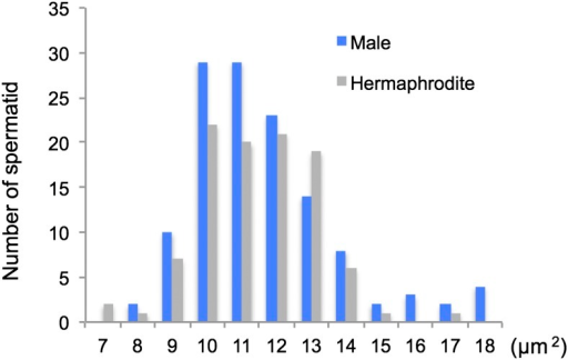 Distribution of spermatid cross-sectional areas in hermaphrodites and males in Bursaphelenchus okinawaensis. The cross-sectional area of spherical spermatids was measured using ImageJ software. A total of 100 sperm from 80 hermaphrodites and 126 sperm from 24 males were measured.