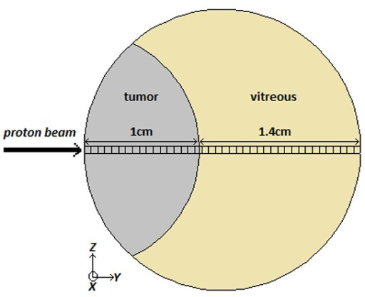 A schematic figure of the simulated eye phantom with a tumor located at the corner of the eye. The rectangular voxels are considered for dose calculation in depth direction.