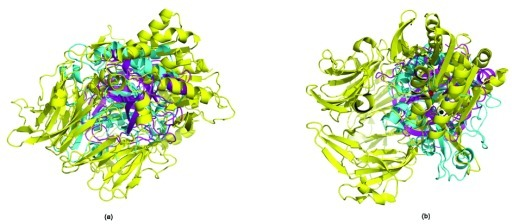 Superimposition of trypsin (PDBid:1A0J - magenta), dipeptidyl peptidase-IV (PDBid:1N1M - yellow) and phosphoinositide-specific phospholipase C (PDBid:1PTD - cyan).It is seen that there is no structural similarity in the two proteins. (a) Using MUSTANG34. (b) Using DECAAF35.