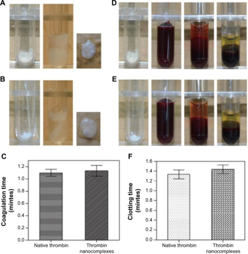 (A) Photographs for the fibrinogen coagulation test in the case of the thrombin nanocomplexes. (B) Photographs for the fibrinogen coagulation test in the case of native thrombin. (C) The fibrinogen coagulation time of native thrombin and the thrombin nanocomplexes. (D) Photographs for the blood coagulation test in the case of the thrombin nanocomplexes. (E) Photographs for the blood coagulation test in the case of native thrombin. (F) The clotting time of native thrombin and the thrombin nanocomplexes.
