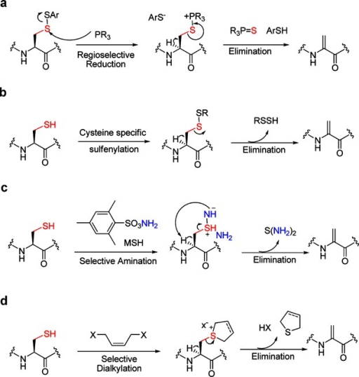 Four alternate modes of elimination of Cys to dehydroalanine (DHA) (a) reduction-elimination of Cys-disulfides to DHA, (b) base-mediated elimination of Cys-disulfides to DHA, (c) oxidative elimination of Cys to DHA, (d) bis-alkylation elimination of Cys to DHA.