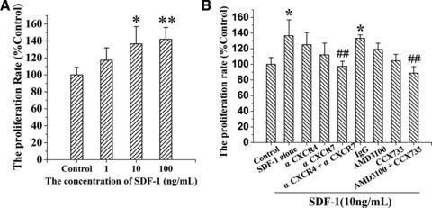 Inhibition of SDF-1-induced proliferation of EPCs by blocking both CXCR4 and CXCR7. The proliferation of EPCs induced by SDF-1 was determined by MTT assay. (A) Dose–response of the proliferation of EPCs treated with SDF-1 (0, 1, 10 and 100 ng/ml) for 8 hrs. (B) Inhibitory effects on 10 ng/ml SDF-1-induced proliferation of EPCs with pre-treatment of either anti-CXCR4 antibody (α CXCR4), anti-CXCR7 antibody (α CXCR7), IgG control, AMD3100 or CCX733, respectively. Data are given as mean ± S.D. (*P < 0.05, **P < 0.01, versus control, ##P < 0.01, versus SDF-1).
