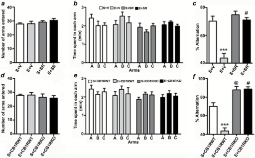 Prior blockade or genetic deletion of CB1Rs prevents P7 ethanol-induced spontaneous alternation performance deficits in adult mice. (a) Total number of arm entries reflecting exploratory activities of mice in the Y-maze does not differ between S+V, E+V, S+SR, and E+SR-treated mice. (b) The time spent in each arm was not different between the four groups (p > 0.05). (c) Spatial working memory of S+V, E+V, S+SR, and E+SR-treated mice were tested by spontaneous alternation performance in the Y-maze. Note that E+V-treated mice perform poorly compared to S+V-treated controls (***p < 0.001), while E+SR treatment restores E+V levels of alternation performance (#p < 0.001 versus E+V). n = 8 mice per group. One-way ANOVA with Bonferroni's post hoc test was used to analyze significant differences. (d) Total number of arm entries reflecting exploratory activities of mice in the Y-maze does not differ between the CB1RWT and KO with or without ethanol. (e) The time spent in each arm was not different between S+CB1RWT, E+CB1RWT, S+CB1RKO, and E+CB1RKO treated mice (p > 0.05). (f) Spontaneous alternation performance of CB1RWT and CB1RKO mice treated with or without saline or ethanol were tested in the Y-maze. Note that the performance of P7 saline-treated CB1RKO mice was significantly enhanced compared to P7 saline-treated CB1RWT mice (@p < 0.001), while ethanol failed to impair alternation performance in CB1RKO mice (#p < 0.001 vs. E + CB1RWT). n = 8 mice per group. One-way ANOVA with Bonferroni's post hoc test was used to analyze significant differences. Each point is the mean ± SEM.