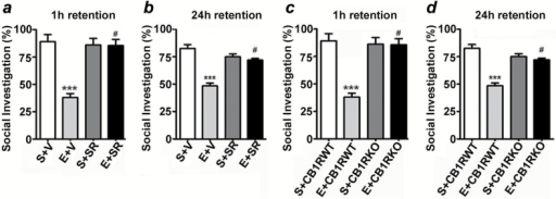 SR pretreatment rescues and CB1RKO provides protection against P7 ethanol-induced social recognition memory loss in adult mice. The percentage of social investigation is shown for S+V-, E+V-, S+SR-, and E+ SR-treated mice at 1h (a) and 24h (b) after the first encounter with the same juvenile mouse. ***p < 0.001 vs. S + V; # p < 0.05 vs. E + V. The percentage of social investigation is shown for S+CB1RWT, E+CB1RWT, S+CB1RKO, and E+CB1RKO mice at 1h (c) and 24h (d) after the first encounter with the same juvenile mouse. Each point is the mean ± SEM (n = 8 mice/group). Two-way ANOVA with Bonferroni's post hoc test: ***p < 0.001 vs. CB1RWT + S; #p < 0.05 vs. CB1RWT + E.