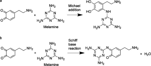 a) Possible Michael addition reaction between oxidised dopamine and melamine. b) Possible Schiff base reaction between oxidised dopamine and melamine.
