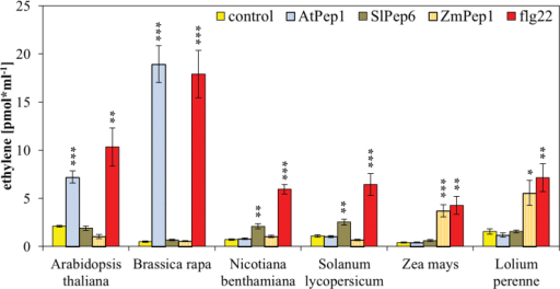 Interfamily incompatibility of Peps. Eight to ten leaf discs of indicated plant species were treated for 5h with 1 µM of the indicated elicitor peptides or without any peptide (control). Columns represent averages of detected ethylene values of five biological replicates. Error bars show the standard error of the mean. Asterisks indicate significant differences of the labelled column to the control based on t-test results (*P < 0.05; *P < 0.01; ***P < 0.001).