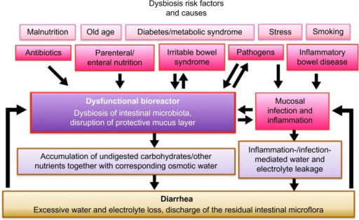 Dysbiosis of intestinal microbiota during diarrhea.Notes: The gastrointestinal tract harbors a complex microbial ecosystem that coexists in equilibrium with the host. When this equilibrium is disrupted, dysbiosis can manifest itself in a vicious cycle, prolonging diarrheic symptoms.