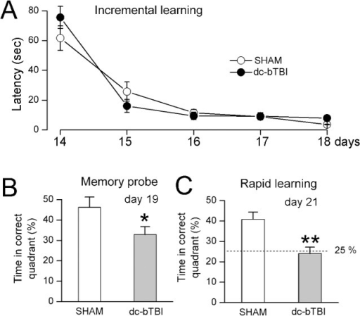 dc-bTBI causes abnormalities incognitive function measured using Morris Water Maze test.Performance during incremental learning (A), memory probe test (B), and rapid learning test (C) during days 14–21, as indicated; n = 10 sham-injury, 10 dc-bTBI; in (C), 25% represents chance alone;*, p< 0.05; **, p<0.01 for comparison between sham and dc-bTBI rats.