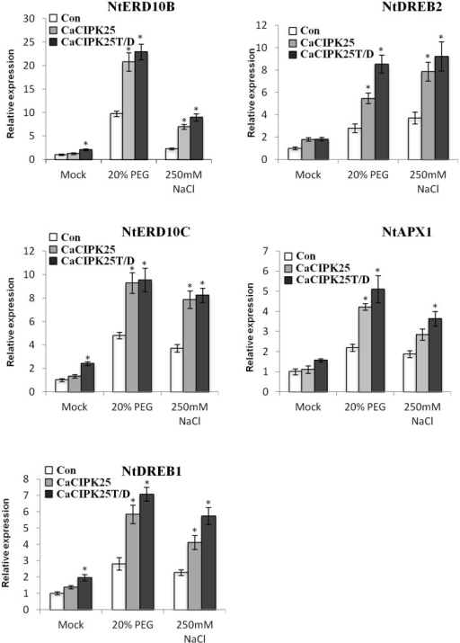 Expression analysis of abiotic stress marker genes in CaCIPK25 overexpressing plants. Expression of known abiotic stress marker genes determined by qRT-PCR in 20-day-old control, CaCIPK25− and CaCIPK25T/D− overexpressing tobacco plants in response to treatments mentioned. Y-axis described the fold change of expression. Tobacco actin gene was used as internal control. * indicates statistically significant difference (p < 0.05) from the control sample.