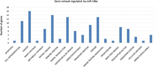 Gene networks regulated by miR-146a. Predicted miR-146a target genes identified by TargetScan and Miranda