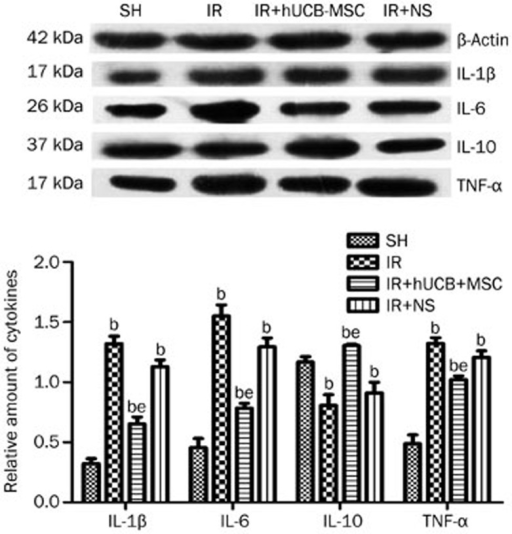 Evaluation of IL-1β, IL-6, IL-10, and TNF-α protein production in peri-ischemic region by Western blot. bP<0.05 vs SH. eP<0.05 vs IR or IR+NS.
