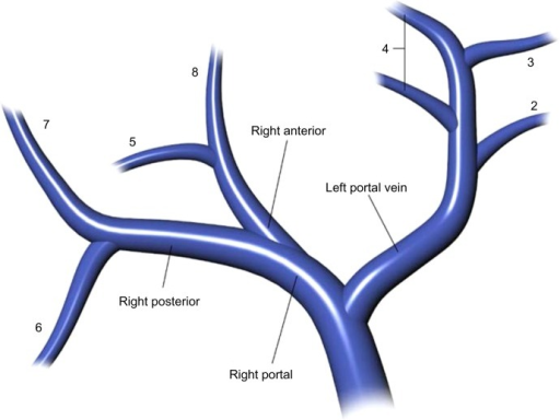 Diagram Of The Portal Venous Anatomy To The Livertes Open I