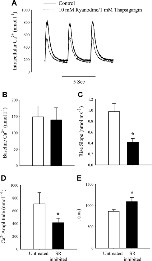 Effects of sarcoplasmic reticulum (SR) inhibitors ryanodine (10 μM) and thapsigargin (1 μM) on the intracellular Ca2+ transient (Δ[Ca2+]i) in isolated ventricular cardiomyocytes from the varanid lizard field stimulated at 0.2 Hz and room temperature. A: representative recording. B: baseline intracellular Ca2+ concentration. C: Ca2+ rise slope. D: Tau (τ), the first-order decay constant of cytosolic Ca2+ clearance during relaxation. E: amplitude of the Δ[Ca2+]i. *Statistically significant difference between controls and SR-inhibited treatments (n = 12).