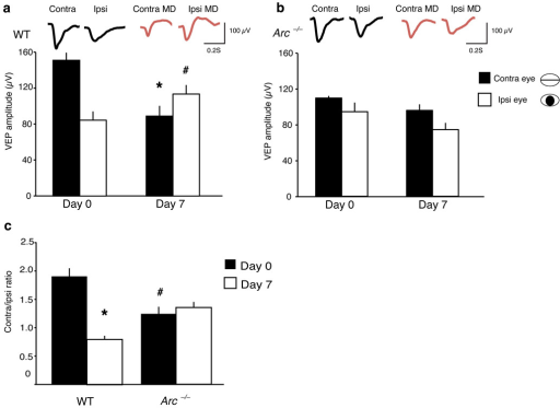 Arc−/− mice exhibit no ocular dominance plasticity as assessed by chronic VEP recordings after long–term monocular deprivation. (a) WT mice exhibit a significant depression in contralateral (deprived eye) responses (n = 7; Day 0=152±9.2 µV, 7 Day monocular deprivation = 89.5±11.5 µV, *p<0.003, paired t–test) and a significant potentiation in ipsilateral responses (n = 7; Day 0=84.9±9.8 µV, 7 Day monocular deprivation=114.2±10.1 µV, #p<0.05, paired t–test). Averaged waveforms are shown at top. (b)Arc−/− mice exhibit no changes in contralateral (n=6; Day 0=112±2.2 µV, 7 Day monocular deprivation=100±6 µV, p>0.1, paired t–test) or in ipsilateral responses (n=8; Day 0=96±8.6 µV, 3 Day monocular deprivation=84±10 µV, p>0.4, paired t–test). Averaged waveforms are shown at top (c) WT mice exhibit a significant shift in the C/I ratio (n=7; Day 0=1.9±0.14, 7 Day monocular deprivation=0.8±0.06, *p < 0.0001, paired t–test), whereas Arc−/− mice exhibit no significant shift in the C/I ratio (n=6; Day 0=1.2±0.1, 7 Day monocular deprivation=1.25±0.11, p>0.7, paired t–test). Arc−/− mice exhibit a significantly smaller baseline C/I ratio than WT mice (WT n=7, C/I ratio 1.87±0.14; Arc−/− n=6, C/I ratio 1.2±0.1, #p<0.003) (Error bars represent SEM).