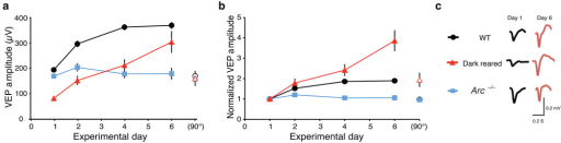Arc−/− mice lack stimulus–selective response potentiation (SRP) whereas dark–reared mice exhibit enhanced SRP in V1. (a) WT mice exhibit large and sustained potentiation of binocular VEPs over many days of exposure to the same stimulus orientation (n=11). Responses to a control orthogonal stimulus (90°, open black circle) shown at day 6 were not significantly potentiated. Dark–reared mice have small VEPs at baseline, which become dramatically potentiated after exposure to the same stimulus orientation (n=12). Responses to a control orthogonal stimulus (90°, open red triangle) are significantly increased compared with baseline VEPs but are also significantly smaller than the SRP orientation at day 6. In contrast, Arc−/− mice exhibit no significant potentiation of responses to the same stimulus (n=16). Responses to the control orthogonal stimulus (90°, blue square) were also not significantly different from baseline, suggesting no general decrease in responses over time. (b) VEPs normalized to baseline values show that dark–reared mice exhibit a relative enhancement of potentiation as compared to light–reared mice, while Arc−/− mice show no relative potentiation of VEPs. (c) Average VEP waveforms at baseline (day 1) and after 5 days of repeated exposure to the same orientation (day 6).