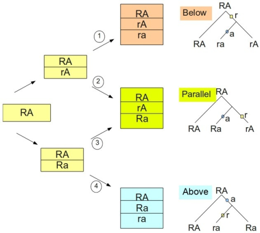 Four possible mutational pathways creating three distinct sets of three haplotypes.Depending on the sequence of mutations starting with the ancestral haplotype on the left, we obtain three sets of haplotypes, referred to as below, parallel and above to reflect the position of the A-site vs. R-site mutation on the genealogy shown on the right. These genealogical positions can be modified by recombination. We assume no recurrent mutations.