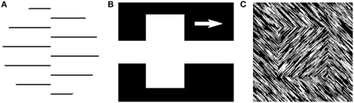 Feature interpolation. (A) A second-order boundary stimulus as used by von der Heydt et al. (1984). (B) A stimulus with an illusory contour is perceived in the white gap between the two parts of the white rectangle, as used by von der Heydt et al. (1984). The arrow indicates that the white rectangle was moving. (C) A stimulus where a shape is defined entirely by second-order cues (that is, a difference in orientation), used in many figure-ground segmentation studies (e.g., Lamme, 1995).