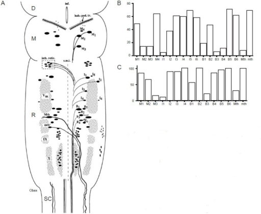Identifiable Reticulospinal Neurons Of Lampreys And Their Different Regenerative Survival AbilitiesA