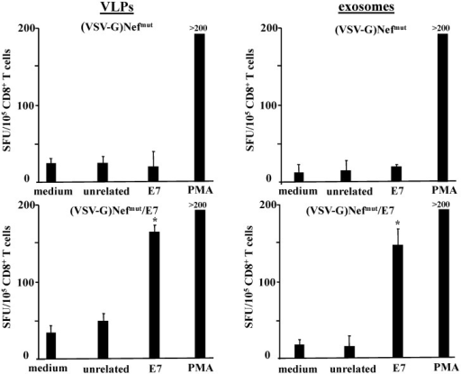 CD8+ T cell immune response in mice inoculated with (VSV-G)Nefmut-based VLPs or exosomes. C57 Bl/6 mice (five per group) were inoculated three times with VLPs or exosomes incorporating Nefmut/E7. As control, mice were also inoculated with equivalent amounts of both nanovesicle types incorporating Nefmut alone. Splenocytes recovered from mice were incubated with or without 5 μg/mL of either unrelated or E7-specific peptides. Afterwards, cell activation extents were evaluated by IFN-γ Elispot assay carried out in triplicate with 105 cells/well. As control, untreated cells were also incubated with 5 ng/mL of PMA and 500 ng/mL of ionomycin. Shown are the mean + SD number of IFN-γ spot-forming cells (SFU)/105 cells. The results are representative of two independent experiments. *p < 0.05.