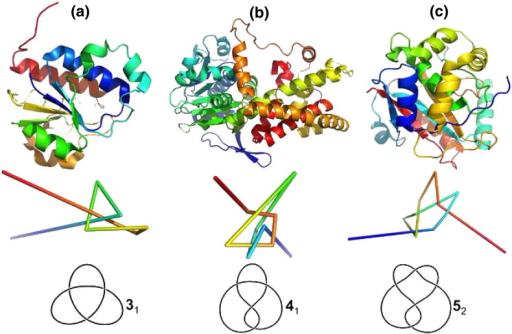 Cartoon representation of the native structure (top), reduced backbone representation obtained with the Taylor smoothing algorithm highlighting a open knot (middle) and corresponding topological knot (bottom) of proteins YibK (PDB ID: 1j85) (a), acetohydroxy acid isomeroreductase (PDB ID: 1yve) (b), and UCH-L3 (PDB ID: 1xd3) (c). The trefoil (or 31), figure-eight (or 41) and penta (or 52) knots exhibit three, four and five crossings on a planar projection. The subscript 1 in 31 (41) stands for first knot with three (four) crossings and subscript 2 in 52 stands for second knot with five crossings, according to standard knot tables The coordinates of the reduced representations were retrieved from http://knots.mit.edu/ and visualized with PyMol (The PyMOL Molecular Graphics System, Open-Source 1.5.x). The topological representations were produced with knotplot (http://www.knotplot.com/).