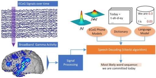 Decoding process in the Brain-to-text system. Broadband gamma power is extracted for a phrase of ECoG data. The most likely word sequence is then decoded by combining the knowledge of ECoG phone models, dictionary and language model.