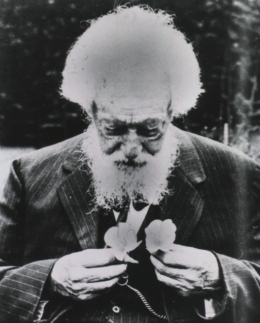 <p>As an old man, half-length, front pose, head tilted forward looking at two flowers which he is holding close to his chest; wearing a suit.</p>