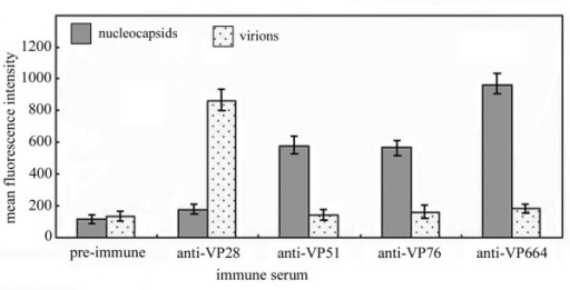 Comparison of mean fluorescence intensity between WSSV capsid group (high-salt treated) and virion group stained with different antiserum (in order: non-immune mouse, anti-VP28, anti-VP51, anti-VP76 and anti-VP664 serum) by immunofluorescence flow cytometry. Data are expressed as the means ± standard deviation of three independent experiments.