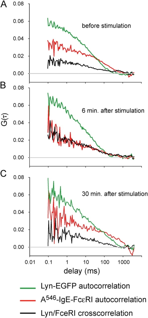 Fluorescence autocorrelation and cross-correlation curves for A546-IgE-FcɛRI and Lyn-EGFP measured on a single cell before and after stimulation with antigen. (A) Before stimulation; (B) 6 min after stimulation; and (C) 30 min after stimulation. Each curve is the average of five 10-s measurements on a single focal spot. Multiphoton excitation wavelength = 860 nm; power = 1.4 mW.