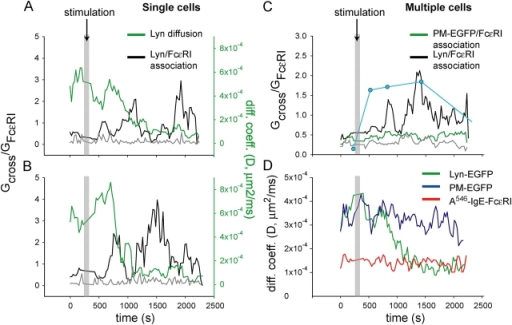 Time variation of diffusion and cross-correlation for Lyn-EGFP and A546-IgE-FcɛRI during stimulation with antigen. (A and B) Two separate single cell measurements of the time variation of diffusion of Lyn-EGFP (green) and the cross-correlation of Lyn-EGFP with IgE-FcɛRI (black). Cross-correlation of Lyn-EGFP with IgE-FcɛRI in the absence of stimulation (gray) comes from a separate measurement on a different cell. The y-axis scale on the left side is the ratio of the amplitude of the cross-correlation G cross (0) and the amplitude of the receptor auto-correlation G FcɛRI(0), and is proportional to the fraction of Lyn-EGFP associated with the receptor (Eq. 1). The black and gray curves are plotted on this axis. The y-axis on the right side represents diffusion coefficients for Lyn-EGFP. The green curve is plotted on this axis. The gray bar indicates the time of antigen addition. (C) Time-resolved cross-correlation averaged over multiple cells. Black, Lyn-EGFP–IgE-FcɛRI in stimulated responding cells (n = 7 cells); green, PM-EGFP–IgE-FcɛRI in stimulated cells (n = 6 cells); gray, Lyn-EGFP–IgE-FcɛRI in unstimulated cells (n = 3 cells). The blue circles show relative FcɛRI β tyrosine phosphorylation, measured by antiphosphotyrosine Western blotting under the same experimental conditions. (D) Time-resolved diffusion averaged over multiple stimulated cells. Green, Lyn-EGFP (n = 7 cells); blue, PM-EGFP (n = 6 cells); red, IgE-FcɛRI (n = 13 cells). Multiphoton excitation wavelength = 860 nm; power = 1.4 mW.