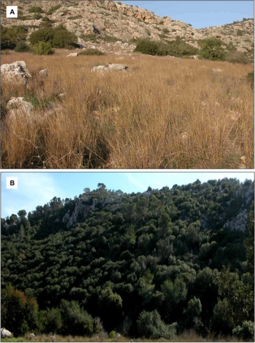 "Habitat divergence in ""Evolution Canyon"".(A) photo showing part of the ""African"" slope (AS)/south-facing slope (SFS) of EC, characterized by light terra rossa soil with a stretch of grass cover that generates a yellow-brownish background. (B) Photo of part of the ""European"" slope (ES)/north-facing slope (NFS), characterized by dark terra rossa soil and shady, humus-laden dark background."