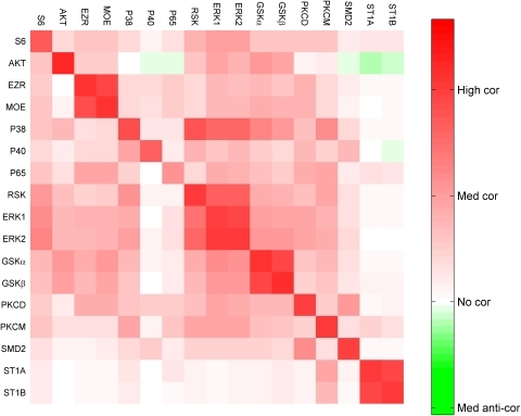Heat-map of the correlation matrix between the input and the output variables.The rows and columns correspond to inputs and outputs, respectively. Negative values of the correlation are small in magnitude (e.g., AKT to P40) compared to positive values of the correlation. Hence, to enhance the visualization, asymmetric color-scale is used.